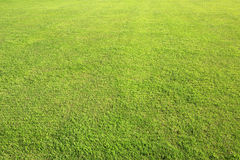 Beautiful green lawn in summer park Royalty Free Stock Photos
