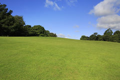 Beautiful green lawn in summer park Royalty Free Stock Image