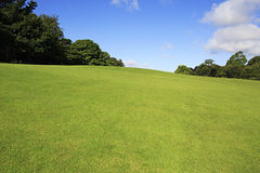 Beautiful green lawn in summer park Royalty Free Stock Photography