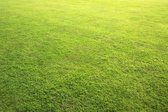 Beautiful green lawn in summer park Royalty Free Stock Images