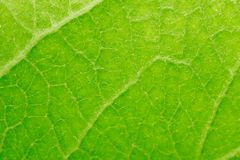 Beautiful green leaf as background. macro. In the park in nature Royalty Free Stock Photography