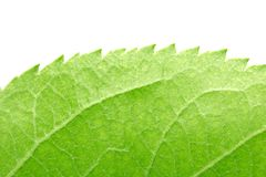 Beautiful green leaf as background. macro. In the park in nature Stock Images