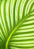 Beautiful green leaf background Stock Images