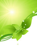 Beautiful green leaf background Stock Image