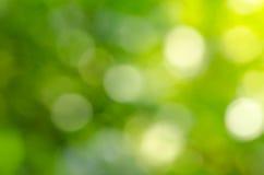 Beautiful green leaf blur background Stock Image