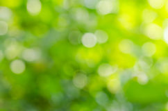 Beautiful green leaf blur background Royalty Free Stock Images