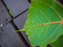 Beautiful green leaf with drops of water Stock Photos