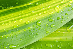 Beautiful green leaf with drops Stock Photo