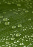 Beautiful green leaf with drops Stock Photography