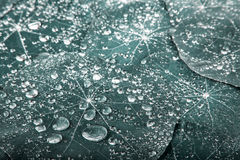 Beautiful green leaf with drops of water. Nature Stock Image