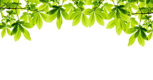 Beautiful green leaf frame Royalty Free Stock Photo