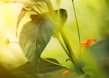 Beautiful green leaf in a sunlight Stock Images