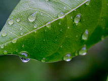 Beautiful green leaf texture with drops of water Stock Photo