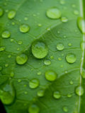 Beautiful green leaf texture with drops of water Royalty Free Stock Photos