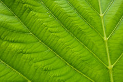Beautiful green leaf texture pattern Stock Photography
