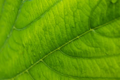 Beautiful green leaf texture pattern Royalty Free Stock Photos