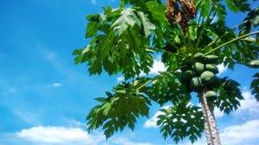Beautiful green leafs stock image
