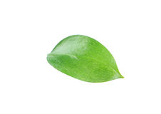 Beautiful green leave isolated on white Royalty Free Stock Image