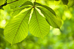 Beautiful green leaves Stock Photos