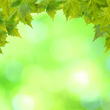 Beautiful green leaves Royalty Free Stock Image