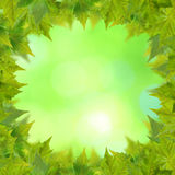 Beautiful green leaves stock image