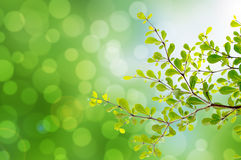 Beautiful green leaves and bright sun and bokeh. Landscaps Royalty Free Stock Image