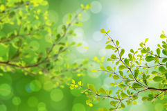 Beautiful green leaves and bright sun and bokeh. Neture Stock Image