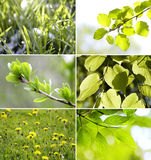 Beautiful green leaves Collection Stock Photos