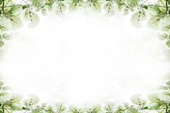 Beautiful green Leaves frame ,art background. Royalty Free Stock Photography