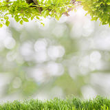 Beautiful green leaves frame with green grass on scenery nature Royalty Free Stock Image