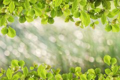 Beautiful green Leaves frame on nature background. Royalty Free Stock Photography
