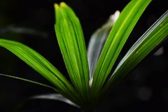 Leaves of palm. Beautiful green leaves of palm Royalty Free Stock Images