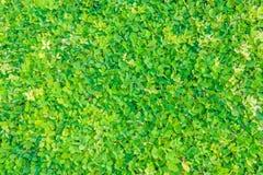 Beautiful Green Royalty Free Stock Image