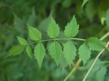 Beautiful green leaves of the tree in summer stock photos