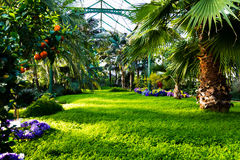 Beautiful Green Lush Greenhouse Plants Oasis Garden Royalty Free Stock Photos