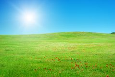 Beautiful green meadow. Royalty Free Stock Images