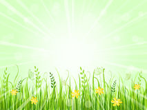 Beautiful green meadow Stock Photos