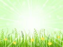 Beautiful green meadow Stock Photos