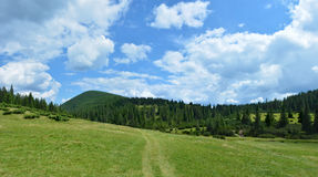 Beautiful green meadow in the Carpathian mountains, Ukraine. Blue Royalty Free Stock Images