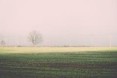 Beautiful green meadow in heavy mist. Vintage. Stock Photo
