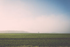 Beautiful green meadow in heavy mist. Vintage. Royalty Free Stock Photography