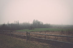 Beautiful green meadow in heavy mist. Vintage. Stock Images