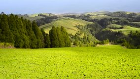 Beautiful green meadow pasture view stock video