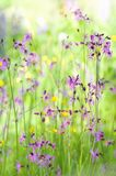 Beautiful green meadow with purple flowers Stock Images