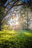 Close up of Beautiful green meadow and trees with sun back lighting. Beautiful green meadow and trees with sun back lighting piercing through branches, france Royalty Free Stock Images