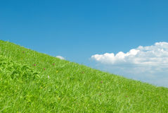 Beautiful Green Meadow with white clouds Stock Photography