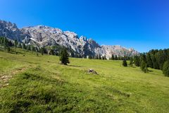 Beautiful green meadows with Latemar mountains group Latemargruppe, under a sunny blue sky Trentino Alto adige, Italy. Europe stock photography