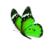 Monarch butterfly isolated. Beautiful green monarch butterfly isolated on white background Royalty Free Stock Photos