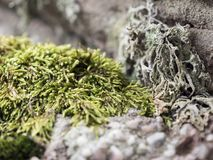 Stone covered with moss in a blurred background stock image