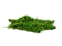 Beautiful green moss close-up isolated on a white background. Royalty Free Stock Photography